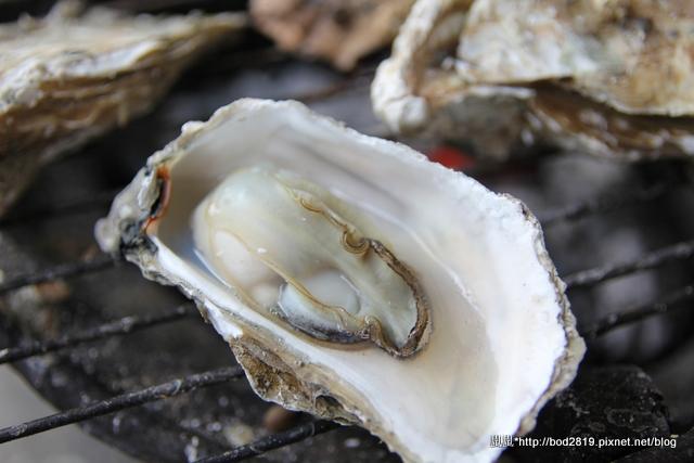 【澎湖旅遊】青灣海底珊瑚之旅+海洋牧場鮮蚵/海鮮粥吃到飽,還有釣魚體驗喔!